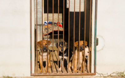 Adopt don't shop – AEZA – our local animal shelter